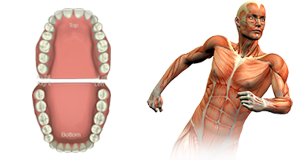 Check Your Dental Health with Meridian Tooth Chart